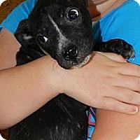 Adopt A Pet :: Milo - Clinton, ME