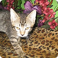 Adopt A Pet :: Wellington - Clearfield, UT