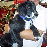 Adopt A Pet :: Captain - Scottsdale, AZ