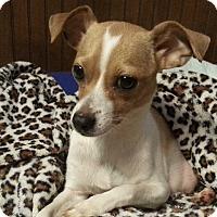 Adopt A Pet :: Laney - Seneca, SC