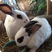 Adopt A Pet :: Pippin (& Jellybean) - Paradis, LA