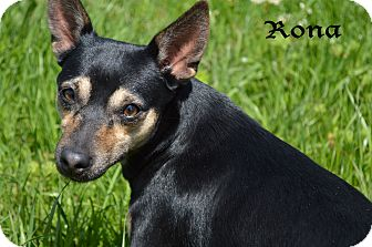 Terrier (Unknown Type, Small) Mix Dog for adoption in Texarkana, Arkansas - Rona