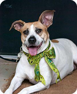Terrier (Unknown Type, Medium)/Terrier (Unknown Type, Medium) Mix Dog for adoption in Baton Rouge, Louisiana - Sally