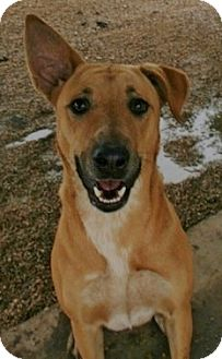 Shepherd (Unknown Type) Mix Dog for adoption in Pilot Point, Texas - CAPRICE