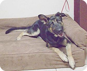 German Shepherd Dog Mix Dog for adoption in Gridley, California - Sophie