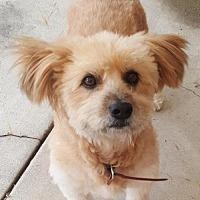 Adopt A Pet :: ZZ-Cereal *courtesy post - Rancho Santa Margarita, CA