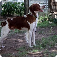 Adopt A Pet :: TX/Brody - Hampton Cove, AL