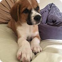 Adopt A Pet :: Green Arrow - Houston, TX