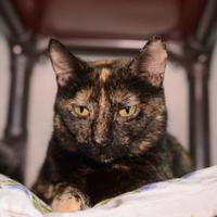 Adopt A Pet :: Sally - New Freedom, PA