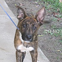 Adopt A Pet :: Fabrizia - Rocky Mount, NC