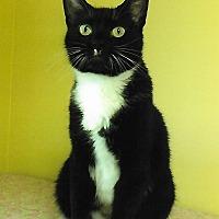 Adopt A Pet :: Maddie - Medway, MA