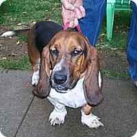 Adopt A Pet :: Louie - Barrington, IL
