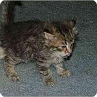 Adopt A Pet :: Muzby OK - East Tawas, MI