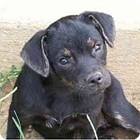 Adopt A Pet :: Jamie - Albany, NY