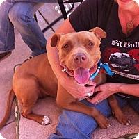 Adopt A Pet :: XENA - Ojai, CA