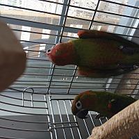 Adopt A Pet :: Java & Jazzy - Punta Gorda, FL
