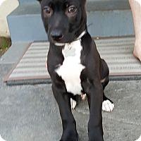 Adopt A Pet :: MOOSE - Winnetka, CA