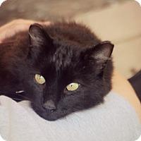 Adopt A Pet :: Knight - Thorp, WI