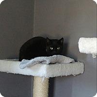 Adopt A Pet :: Juliet - Colmar, PA
