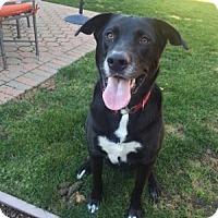 Adopt A Pet :: Pepper Jack - San Francisco, CA