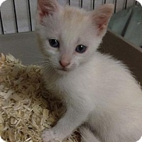 Adopt A Pet :: Bella - Brainardsville, NY