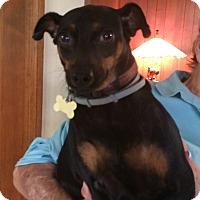 Adopt A Pet :: Mary - Savannah, GA