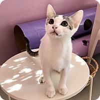 Adopt A Pet :: DECKLYN - Bakersfield, CA