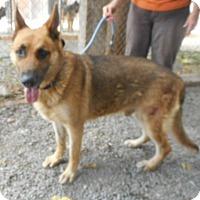 Adopt A Pet :: Bowie - Yucaipa, CA