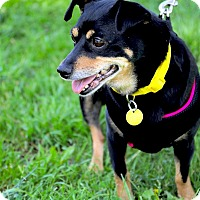 Adopt A Pet :: Lexi - Oakland, CA