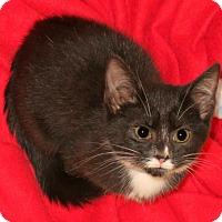 Adopt A Pet :: Jazzy - Bedford, VA