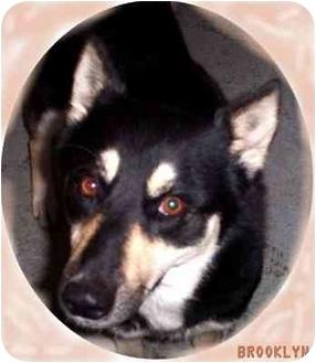Husky Mix Dog for adoption in Ozark, Alabama - Brooklyn