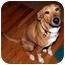 Photo 1 - Collie Mix Dog for adoption in Overland Park, Kansas - Sabine