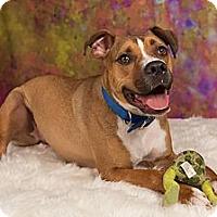 Adopt A Pet :: Slim Jim - Eugene, OR