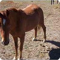Adopt A Pet :: Rocket - Pueblo, CO