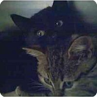 Adopt A Pet :: Kittens -all - Fort Lauderdale, FL