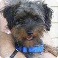 Adopt A Pet :: Sabrina - Dayton, OH
