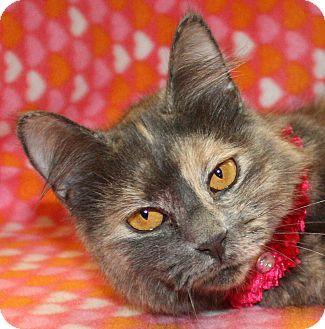 Domestic Mediumhair Cat for adoption in Jackson, Michigan - Fiona