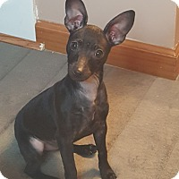 Adopt A Pet :: Zayday - Knoxville, TN