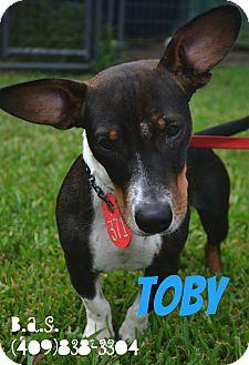 Dachshund/Basset Hound Mix Dog for adoption in Beaumont, Texas - Toby