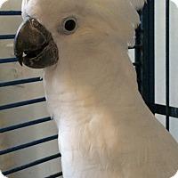 Adopt A Pet :: Yoshi - Punta Gorda, FL