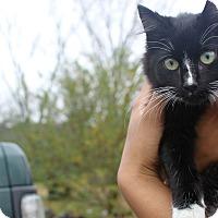 Adopt A Pet :: Monroe - Nolensville, TN
