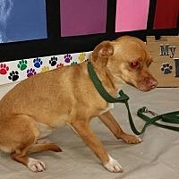 Adopt A Pet :: Bonnie - Fresno, CA