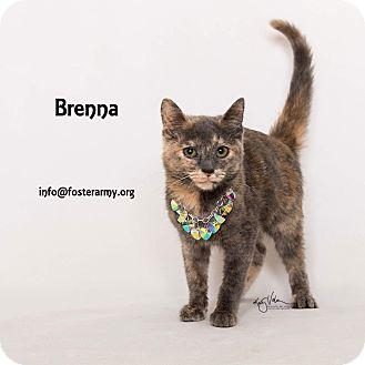 Domestic Shorthair Kitten for adoption in Riverside, California - Brenna