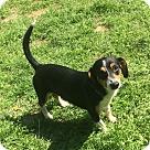 Adopt A Pet :: Costello