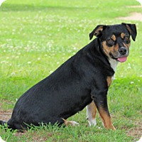 Adopt A Pet :: Rosebud - Savannah, TN