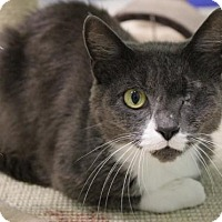 Adopt A Pet :: Calypso - Tallahassee, FL