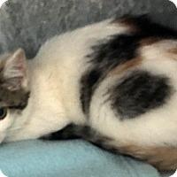 Adopt A Pet :: Bonnie - Loogootee, IN