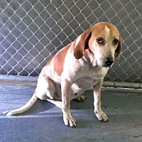 Adopt A Pet :: Susie - Aurora, IL