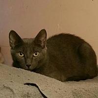 Adopt A Pet :: Macie - Minneapolis, MN