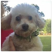 Adopt A Pet :: Opal - Holly Springs, NC
